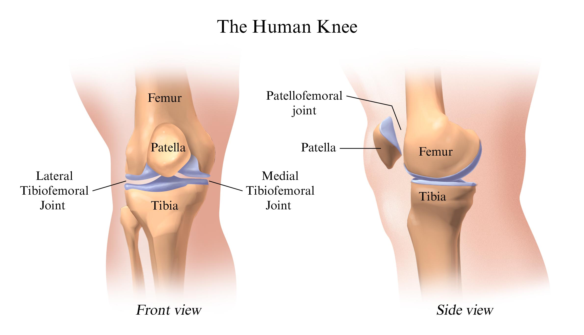 Smoking Worsens Knee Osteoarthritis