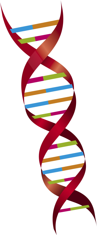 Dna And Genes Worksheet – Dna and Genes Worksheet
