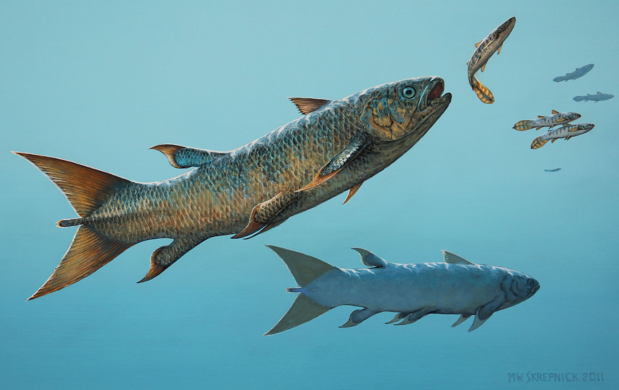 An ancient killer coelacanth from canada for Did humans evolve from fish