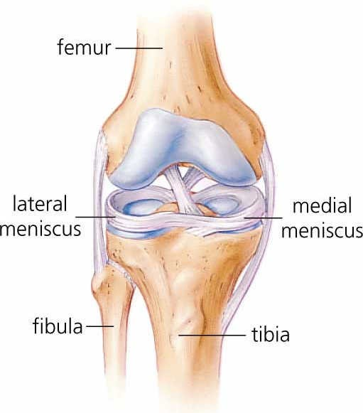 Sore Knees Solving Meniscus Micro Structure Could Improve Treatments