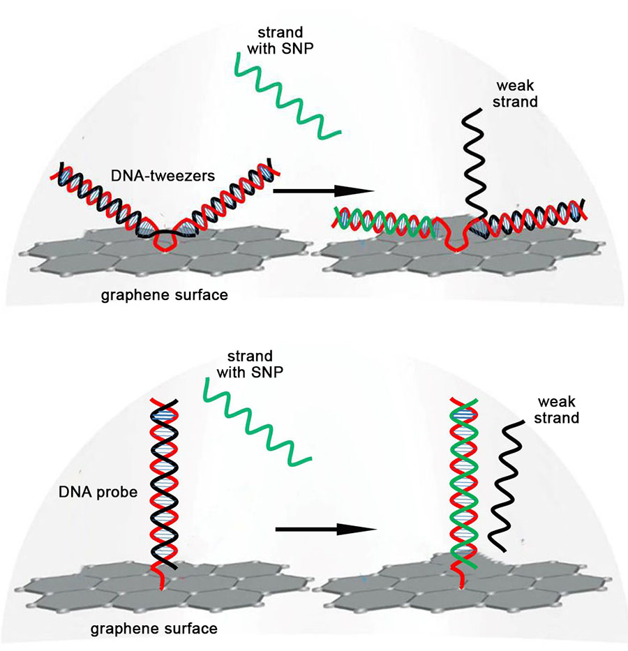 how to detect single nucleotide point mutation