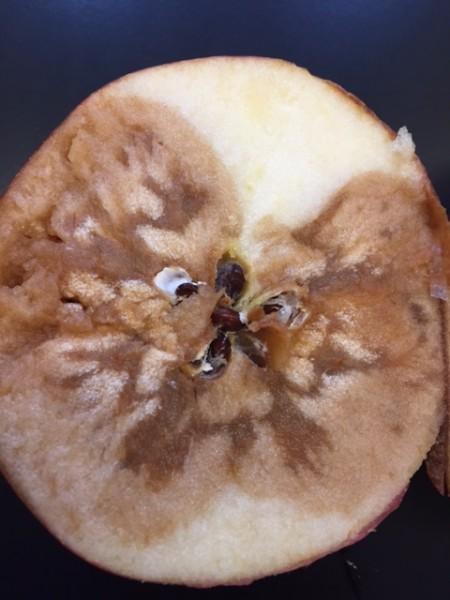 Resilient New Apple Disease Spoils Even Pasteurized Foods
