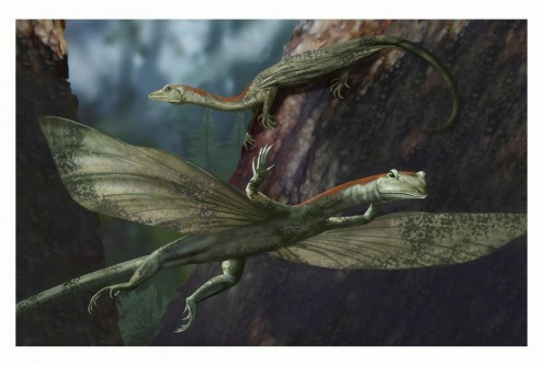 Newswise: Ancient Long-necked Gliding Reptile Discovered