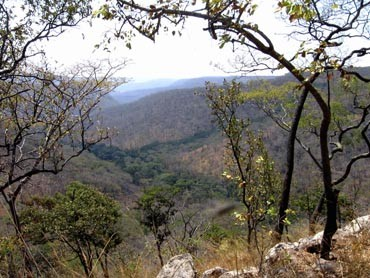 The Ugalla region of western Tanzania is a dry woodland savanna and home to chimpanzees that apparently use tools to dig up the underground storage organs of plants for food. The tool-using behavior may parallel the behavior of early hominids who left the forest for the African savanna five million years ago, according to University of Wisconsin-Madison anthropology professor Travis Pickering.
