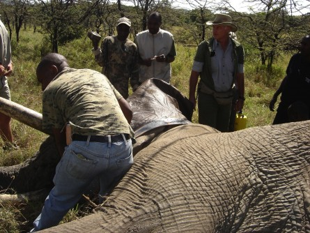 Newswise: Scientists Track African Elephants With Satellite Collars