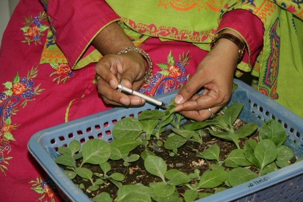 Student in a plant pathology workshop held at the clinic.