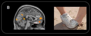 Newswise: Brain Scans Show Children Naturally Prone to Empathy