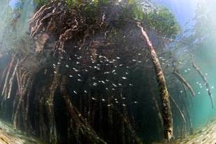 Newswise: Study Sets High Economic Value on Threatened Mexican Mangroves
