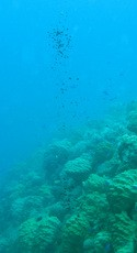 Newswise: Scientists Find Oil Leak Threatening Chuuk Lagoon