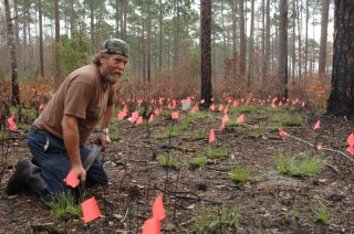 Veteran worm grunter Gary Revell surrounded by flags that mark places where earthworms have emerged in response to the vibrations he is creating.