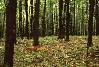 Newswise: Climate Change, Acid Rain Could Be Good for Forests