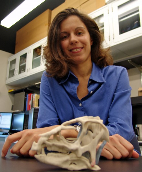 Study co-author Laura Porro, a post-doctoral student at the University of Chicago, with a model skull of a full grown heterodontosaur.