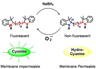 Newswise: New Fluorescent Probes Detect Reactive Oxygen Species