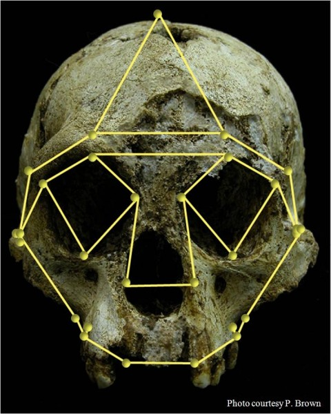 The 3-D landmarks superimposed from the front of the LB1 Skull of Homo floresiensis, also known as the Hobbit, helped researchers conclude that the fossil is not human.