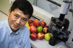 Newswise: Researcher Details Role of Apples in Inhibiting Breast Cancer