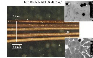 The color changes from conventional bleach are apparent as is the corresponding damage caused to hair fibers (bottom image).