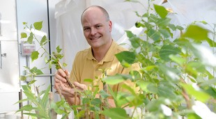 Dr. Joel G. Burken, professor of environmental engineering at Missouri University of Science and Technology (Missouri S&T), in his greenhouse at Missouri S&T, where he studies the use of poplar trees to remove pollutants from soil.