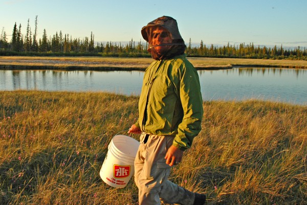 University of Utah biologist Mike Shapiro, with mosquito netting for protection, walks along one of the Fox Holes Lakes in Canada's Northwest Territories. Shapiro collects stickleback fish from this and other lakes and the ocean for studies of the genetics of diversity in the animal world, and how identical traits in different species can arise sometimes from the same gene, and sometimes from different genes.