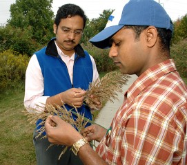 University of Delaware plant scientist Harsh Bais (left) and Thimmaraju Rudrappa, former UD postdoctoral research who is now a researcher at DuPont, examine...