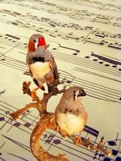 Newswise: Songbirds Reveal How Practice Improves Performance