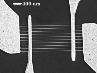 Scanning electron microscope image shows ten graphene nanoribbons between each pair of electrodes.