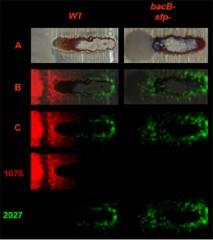 /images/uploads/2009/11/5/bacteria.jpg