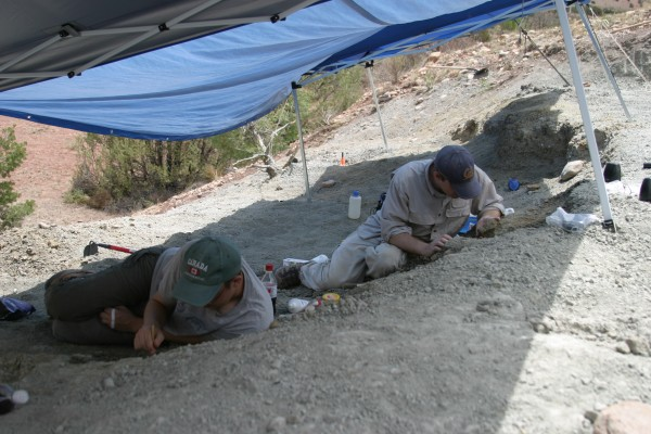 Randall Irmis (left), of the Utah Museum of Natural History at the University of Utah, and Sterling Nesbitt (right) excavate at the Hayden Quarry, Ghost Ranch, New Mexico.