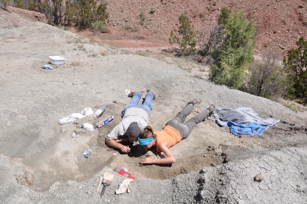 Sterling Nesbitt (left) and Michelle Stocker (right) excavate a new dinosaur specimen at Hayden Quarry, Ghost Ranch, New Mexico.