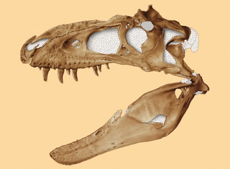 Newswise: New Species of Tyrannosaur Discovered in Southwestern U.S.