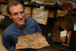 Entomology professor Richard Hofstetter is studying infested ponderosa pine trees. Under the bark, bark beetles tunnel, mate, lay eggs and eat the living...