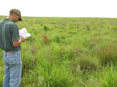 Determining native mixed species composition 