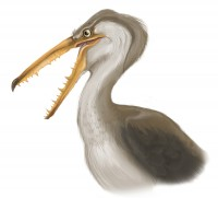 Artist's perception of P<I>elagornis chilensis</I> in life
