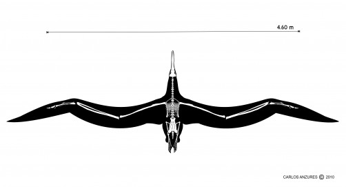 Newswise: Fossil of Giant Bony-Toothed Bird from Chile Sets Wingspan Record