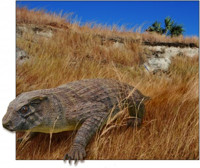 Newswise: Bizarre Reptile Challenges Notion of Crocodiles as 'Living Fossils'