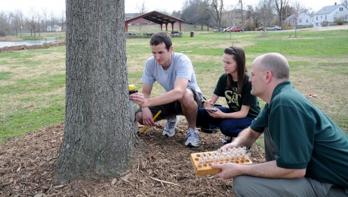 Newswise: Researcher Use Trees to Detect Contaminants and Health Threats