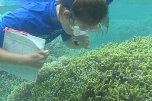 An American University graduate student contributing to Kim's research examines coral off the coast of Guam.