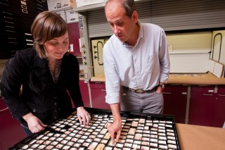 Graduate student Kristen Krueger and Distinguished Professor of anthropology Peter Ungar studied microwear found evidence of dietary differences in the teeth...