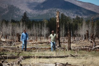 NAU forest ecologists Mike Stoddard, left, and Matthew Hurteau are concerned that ponderosa pine forests are not regenerating after unnaturally intense...