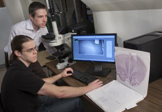 Devin Mueller (back), assistant professor of psychology, and doctoral student James Otis compare scans of rat brains used in their recent study on how the brain...