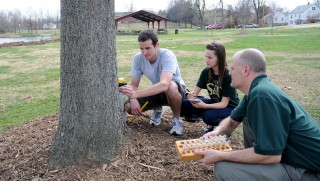 Testing trees in Schuman Park in Rolla, Mo., are Missouri S&T graduate student Matt Limmer, environmental engineering freshman Amanda Holmes and Joel Burken,...