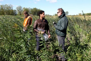 Mohamed Hijri's team evaluates the progress of work on a contaminated site in the Greater Montreal region, where they have planted cuttings that carry...