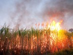 Study Shows Sugarcane Ethanol Production Causes Air Pollution