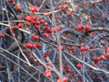 Newswise: Ecologists: Screen Plant Imports to Foil Invasives