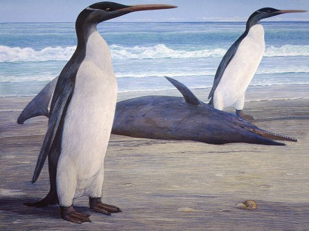 Newswise: First Full Look at Prehistoric New Zealand Penguin