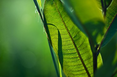 Newswise: New Light Shined on Photosynthesis