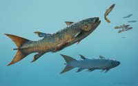 The fast-swimming coelacanth Rebellatrix chasing smaller species of fishes in the Early Triassic ocean west of Pangaea.