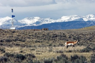 A study by the Wildlife Conservation Society documents that intense development of the two largest natural gas fields in the continental U.S. are driving...