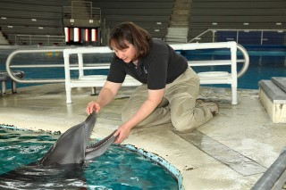 Sue Hunter, the National Aquarium's director of animal programs and marine mammals, examines a resident dolphin.