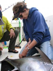 Prof. Molly Lutcavage tags a fish on deck before releasing it.