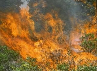 Wildfires and Sierran ecosystems